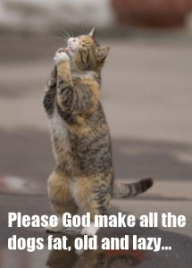 funny-praying-cat-picture
